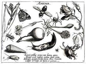 Naaktslak, een peer, schelp en diverse bloemen en insecten