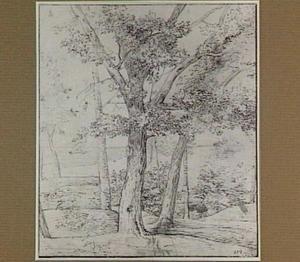Landschap met bomen; op de achtergrond een zeilboot