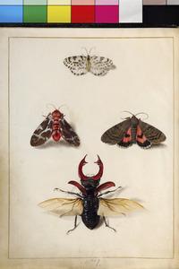 Drie vlinders en een vliegend hert