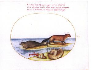 Bever, zeehond, twee tropische schelpen en een stuk koraal