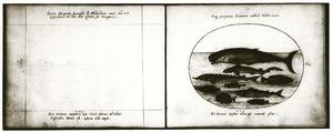Walvis, haai, zwaardvis, steur en andere vissen