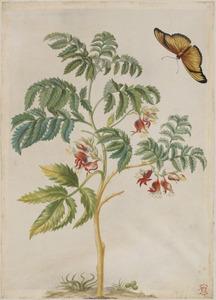 Gekuifde honingbloem en oranje passiebloemvlinder
