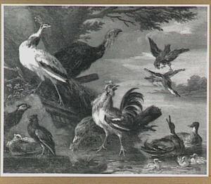 Pluimvee aan het water; rechts valt een roofvogel een eend aan