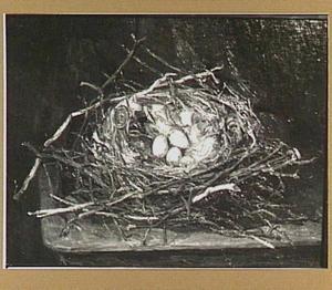 Nest met kievitseieren