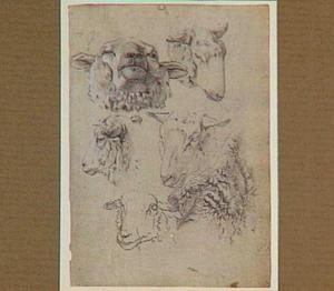 Studies van geiten en bokken