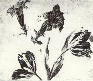 Gentianen en tulpen