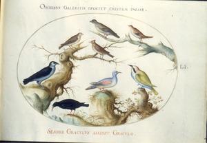 Acht zangvogels