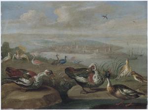 Eenden en andere vogels in een lkustandschap