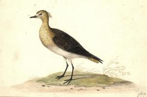 Vogel met gespikkelde gele kop en borst en zwarte vleugels