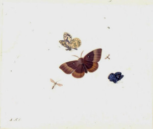 Drie vlinders, mug en vliegende mier