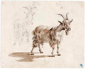 Twee studies van een geit