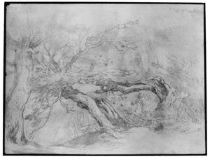 Knoestige bomen in landschap
