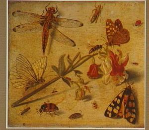 Studie van vlinders en andere insekten rondom een bloem
