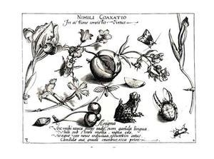 Kikker, spin en andere insecten, appel en enkele bloemen
