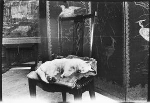 Kat slapend op een stoel in het atelier