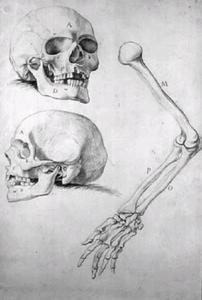 Twee schedels en een arm