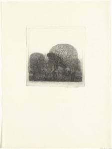 Steenuiltje voor bomen