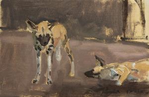 Twee wilde honden