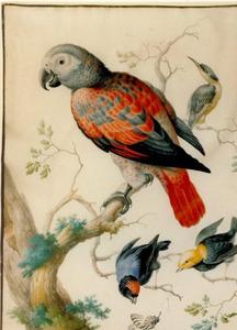 Papegaai en drie andere vogels op takken van een boomstronk