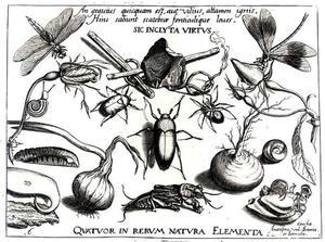 Kever, twee rozen, een sprinkhaan en andere insecten