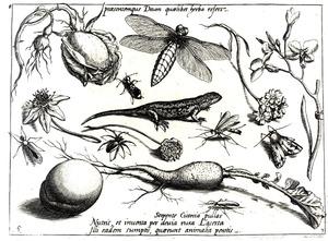 Salamander, bloemen, insecten, wortel en perzik