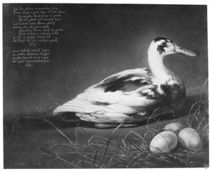 De eend Sijctghen