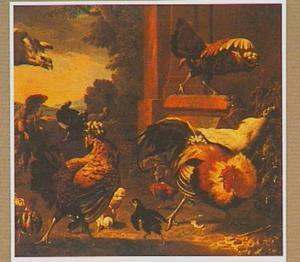 Hoenders aangevallen door een roofvogel