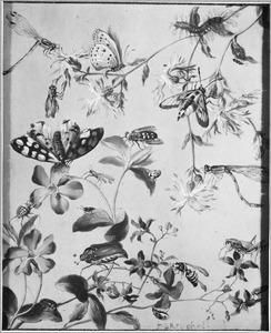 Insekten en bloemen