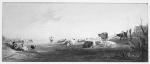 Weide met kudde in de achtergrond de stad Dordrecht