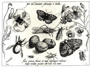 Drie walnoten, twee bloemen, een sprinkhaan, vlinder, kever en andere insecten