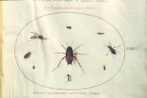 Negen insecten waaronder kevers, een mier en een wesp