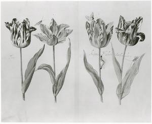 Vier tulpen (Tornay, Kisten Macker en Gefleis(?)gelte), twee sprinkhanen, een rups en een vlinder