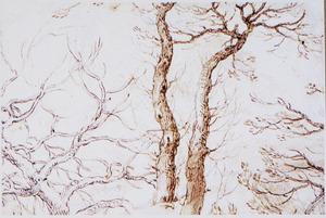 Studie van bomen en takken