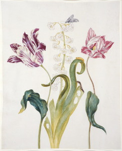 Twee tulpen, een hyacinth met rups, een pop en een vlinder