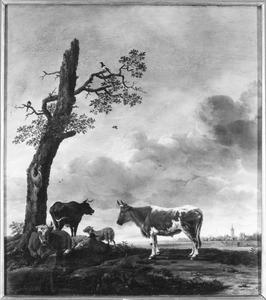Koeien en schapen bij een kale boom