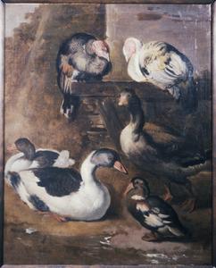Eenden, ganzen en kalkoenen aan de waterkant