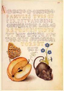 Moerasvergeet-mij-nietje, appel, muis en vlinder