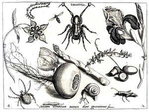 Vogelspin, meiknol, asperge, bloemen, eikels en insecten