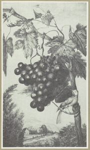 Druivenrank met druiventros en Witte Kwikstaart