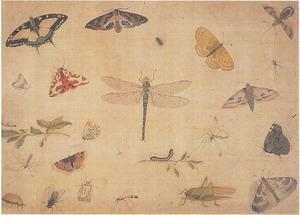Vlinders, een libel, een sprinkhaan en andere insecten