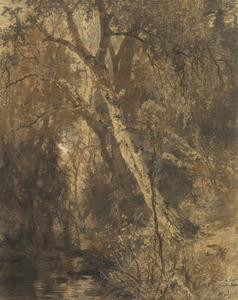 De oude berkenbomen