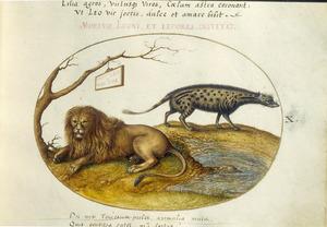 Leeuw en hyena