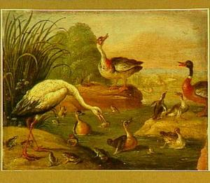 Een ooievaar die een kikker eet, kikkers en eenden in
