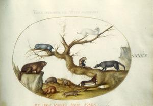 Bever, muis en andere knaagdieren