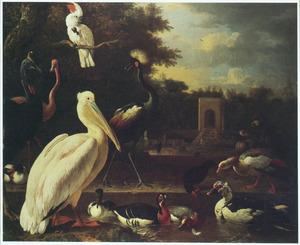 Exotische vogels en watervogels in een park