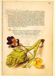 Boterbloem, driekleurig viooltje en artisjok