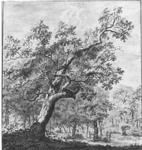 Grote eik aan de rand van een bos