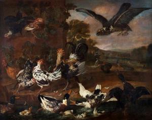Hoenderhof met aanvliegende roofvogel