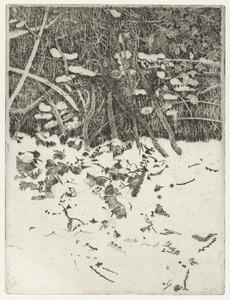 Tuin in Rhijnauwen: Hekwerk met klimop en sneeuw