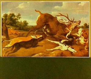 Honden vallen een hert aan
